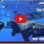 "Seahawksub & One Shot One Kill in ""Blu Cobalto"""