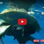 Sea Hawk Sub & One Shot in Dentice Esplosivo