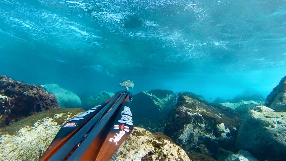 seahawksub Spearfishing  pescasub Fab