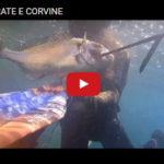 Pesca sub saraghi orate spigola ricciola Seahawk-Akiller