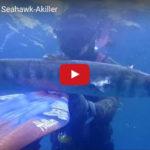 Barracuda XXL Seahawk-Akiller