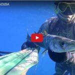 Agguato al Barracuda