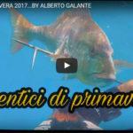 Dentici di Primavera… Alberto Galante