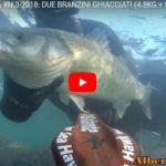 PESCA SUBACQUEA #N.3-2018: DUE BRANZINI GHIACCIATI (4.8KG + 5.2KG) SEA BASS BIG, LOUP DE MER, LEVREK