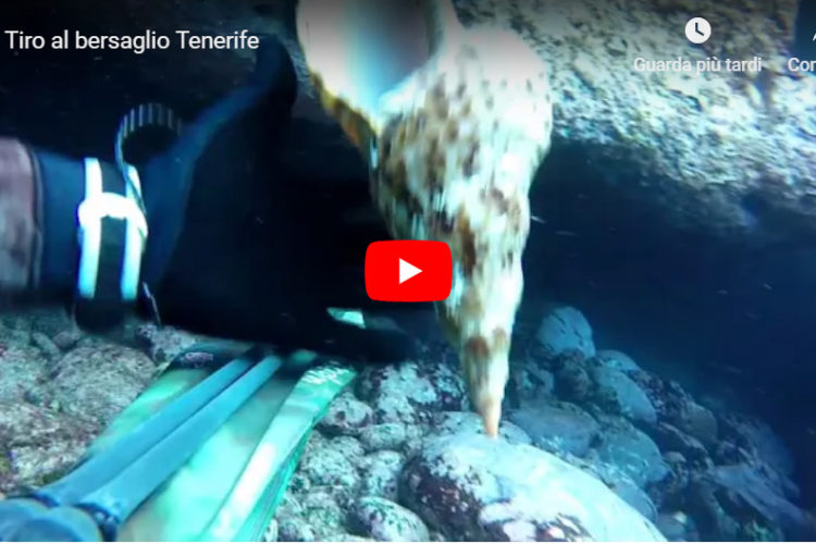Seahawksub Sperarfishing pescasub Alex picardi 001