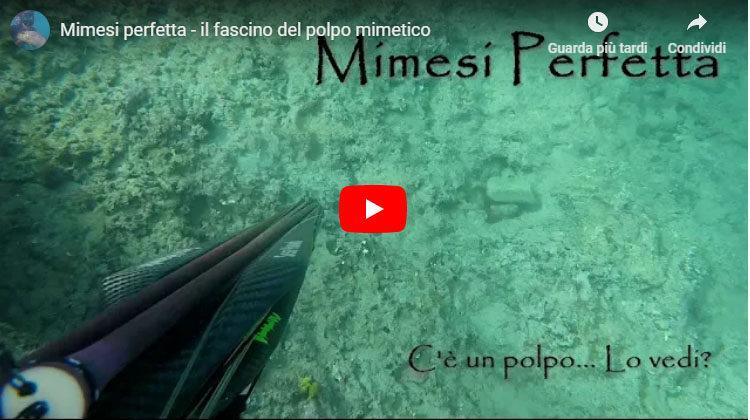 Seahawksub Sperarfishing pescasub Veleno Francesco Savino 002