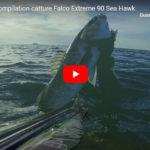 Bellissima compliation di Claudio Basili con il Falco 90