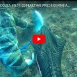 PESCA SUBACQUEA #N.11-2018:ULTIME PREDE DI FINE ANNO IN ADRIATICO