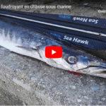 barracuda tir foudroyant en chasse sous marine 1