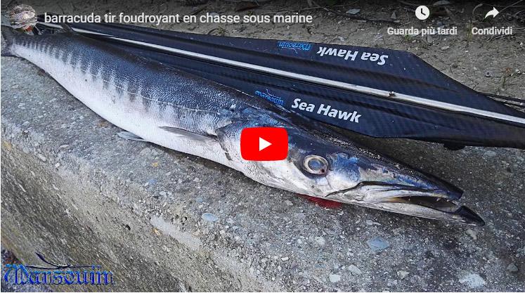 Seahawksub Sperarfishing pescasub Didier 001
