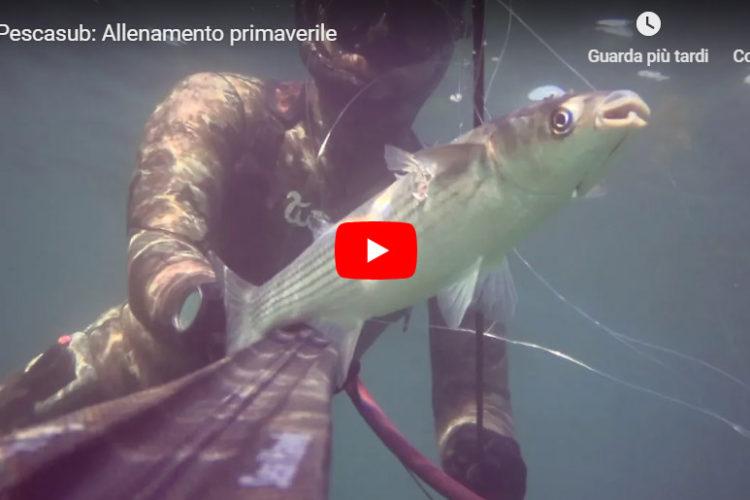 Seahawksub Sperarfishing pescasub Veleno Blackboyz 002