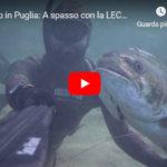 Pescasub in Puglia: A spasso con la LECCIA AMIA di 15 kg